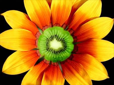 Kiwi Flower Puzzle Jigzonecom