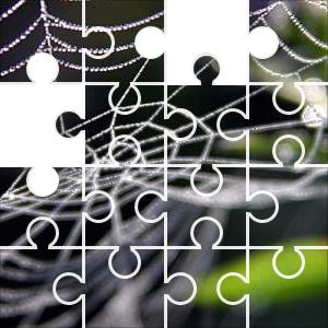 Web Puzzle