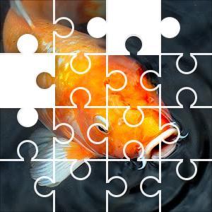 Orange koi puzzle for Decorative pond fish crossword clue